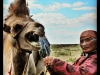camel-and-nomadic-woman-in-mongolia
